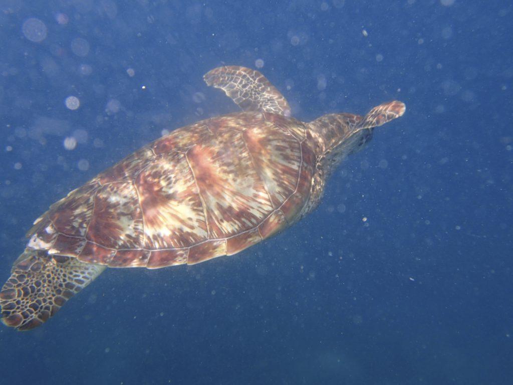ドゥマゲッティの有名観光地「アポ島」