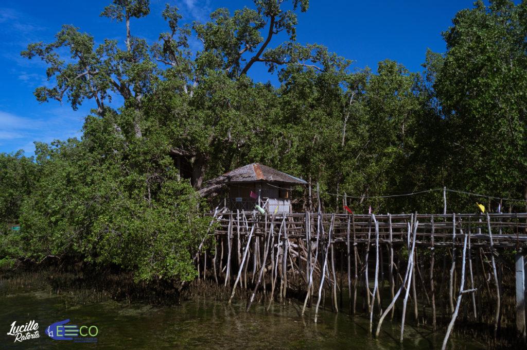 シキホール島のマングローブ保護区